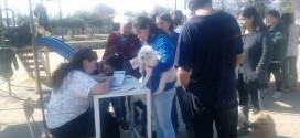 Más de 200 Mascotas Fueron Vacunadas en  Comuna de Codegua