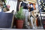 perro, PDI, detective