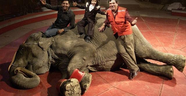 #Ramba; Elefanta Icono de Maltrato Animal Emprende Viaje a Santuario en Brasil